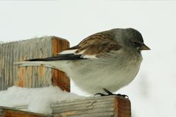 animale invernale val di fassa