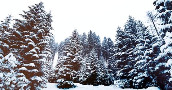 vacanze invernali in val di fassa